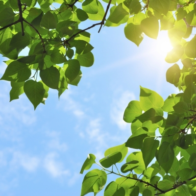 Projekti in ukrepi za energetsko prihodnost