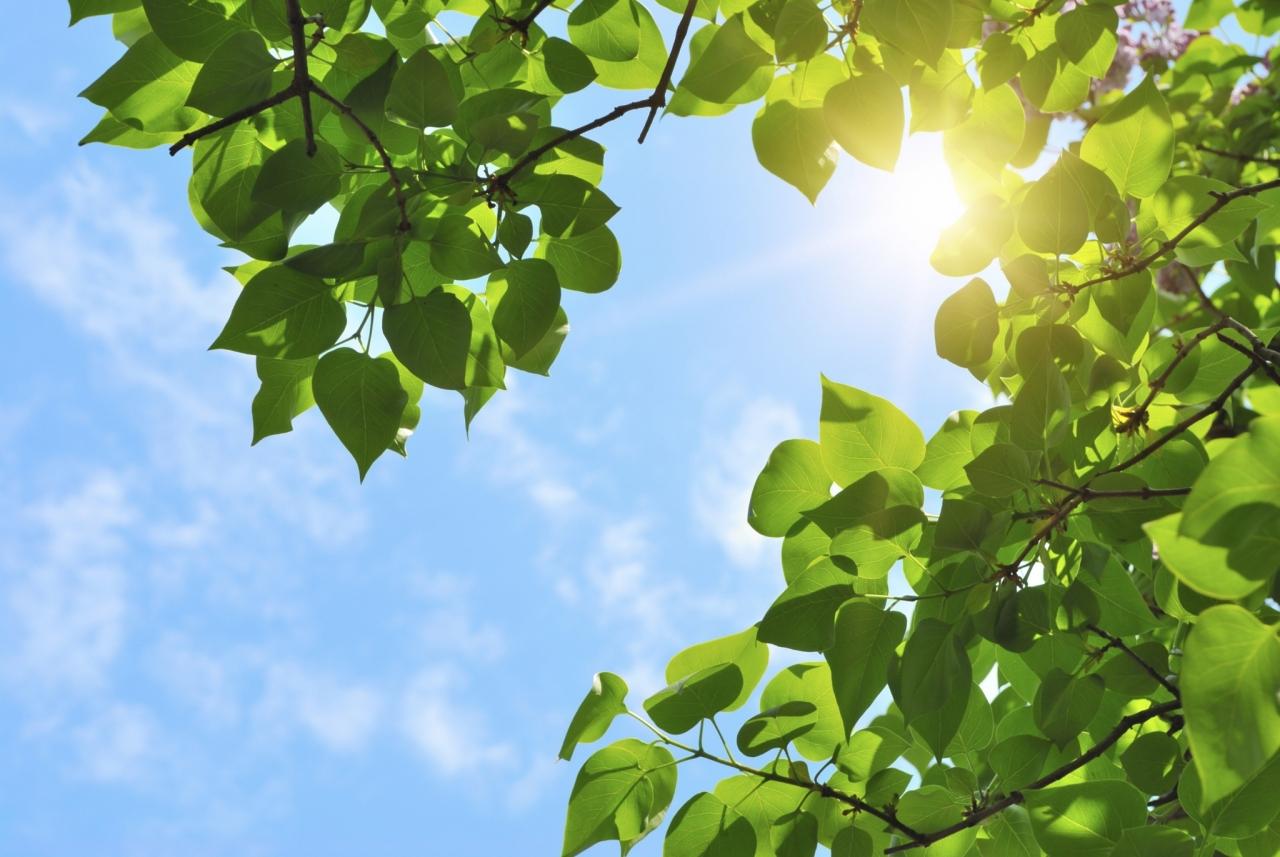 IEA poziva k inovacijam za čisto energijo