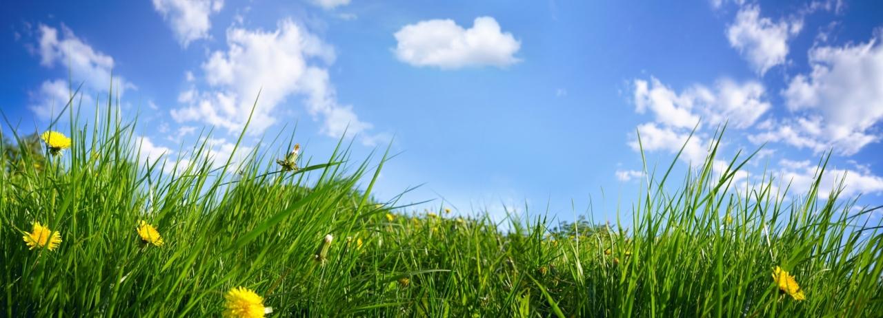 COP24: Pomembni so vsi nizkoogljični viri