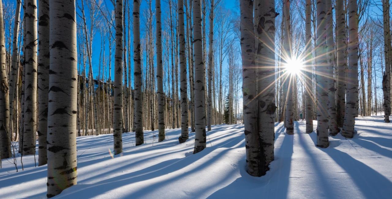 COP25 zaključen s ciljem podnebne nevtralnosti do leta 2050