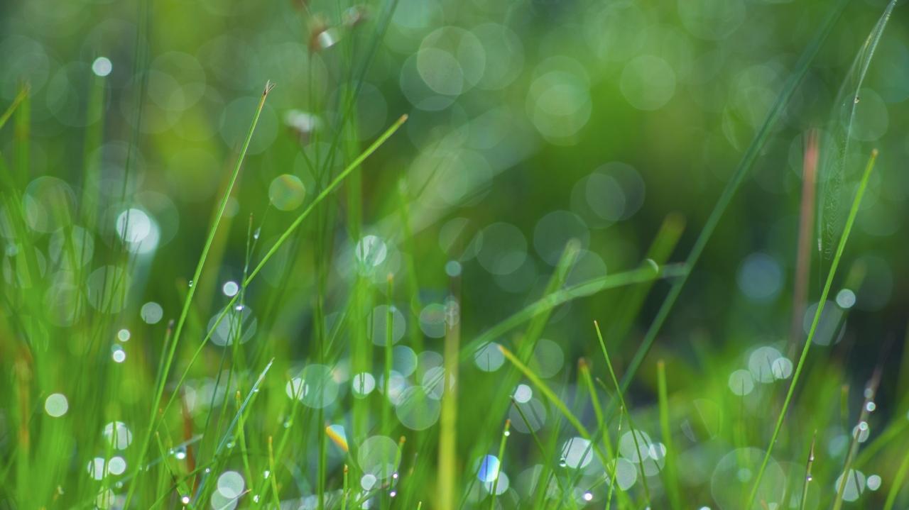 Korak bližje do proizvodnje energije iz alg