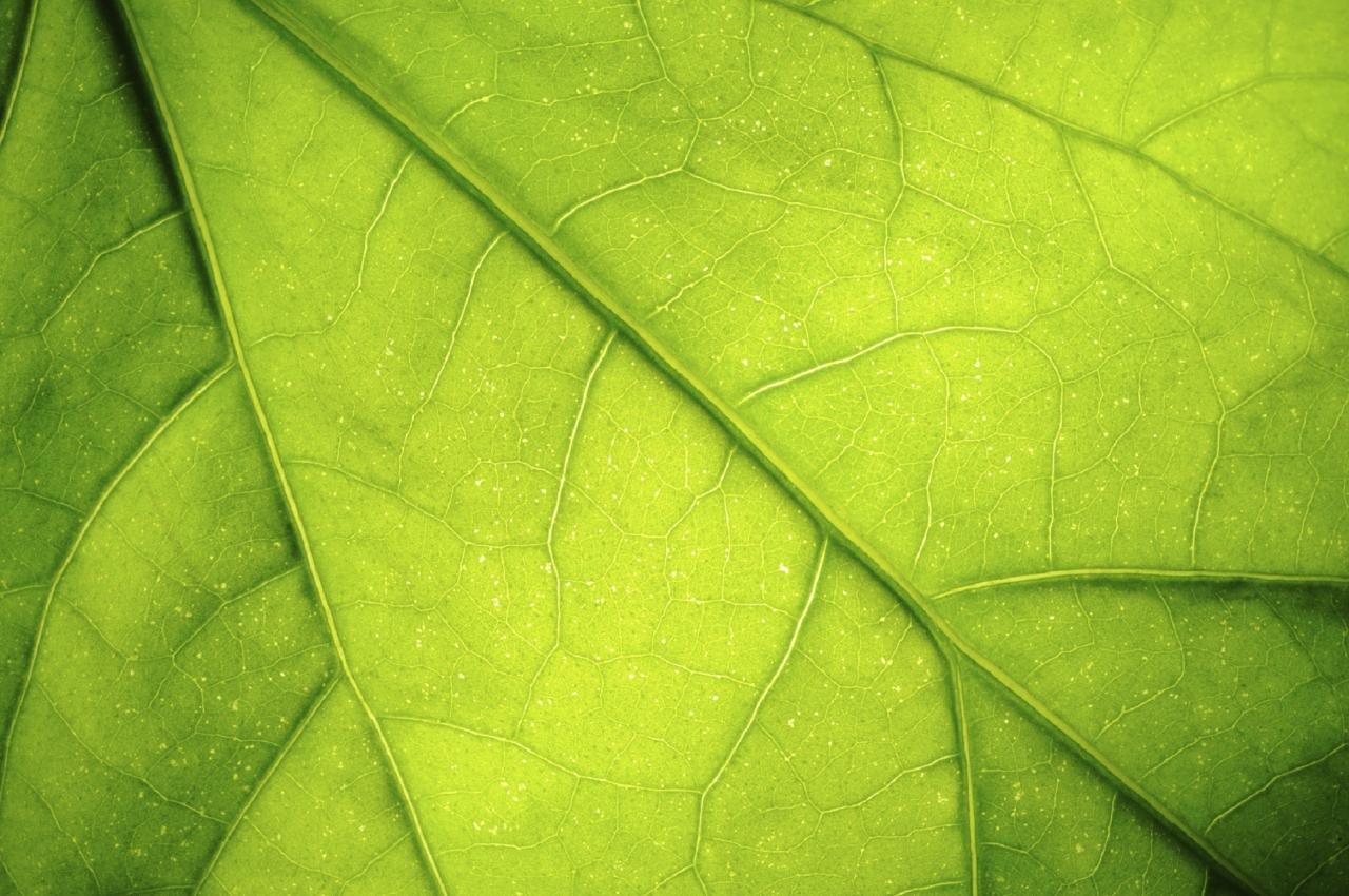 Nov material za zajemanje ogljika